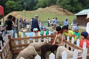27年度羊の毛刈り体験会IMG_1710