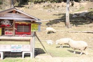 吉栗牧場でかわいい羊の赤ちゃんが誕生しました。