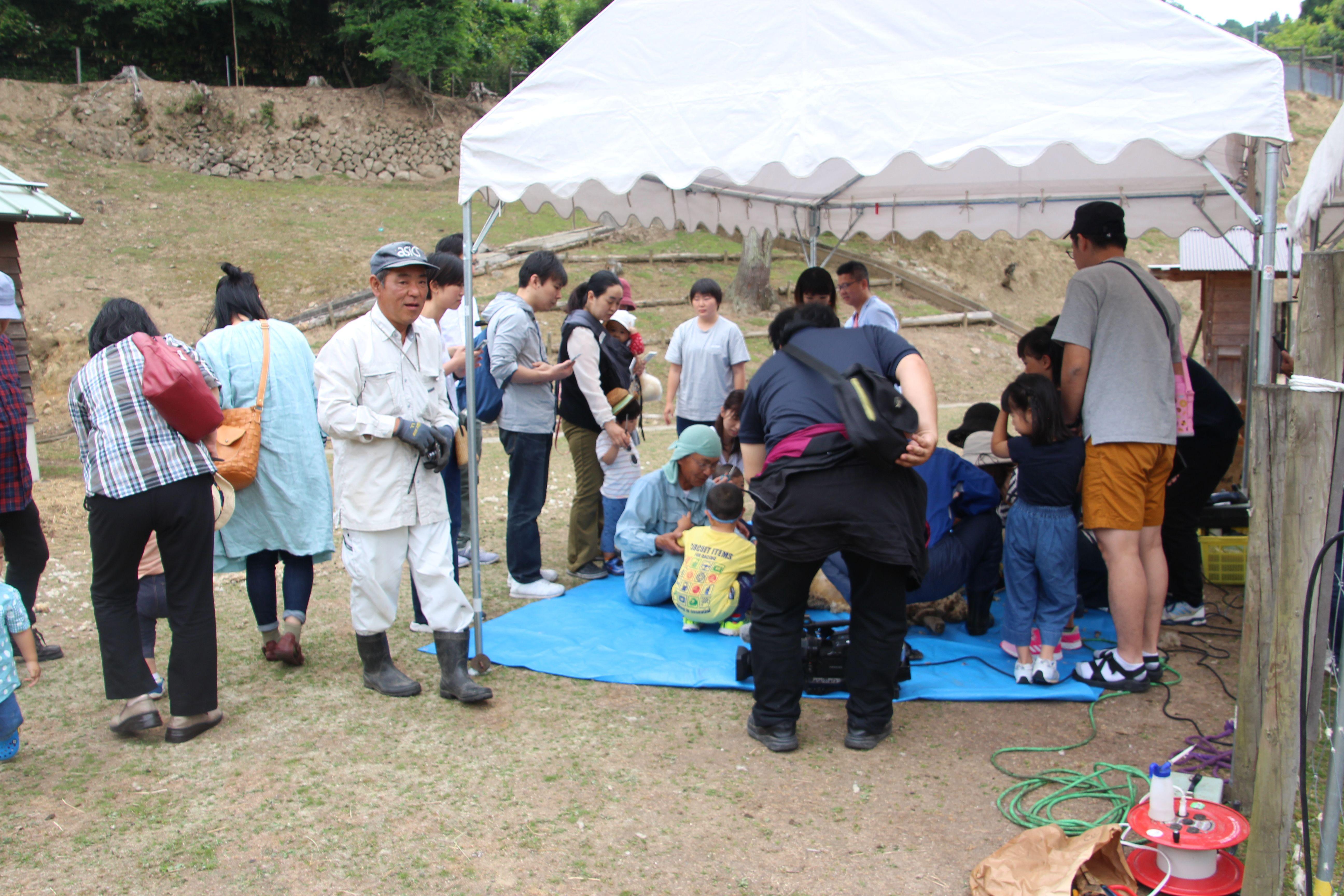 令和元年度羊たちの毛刈り体験会が開催されました。